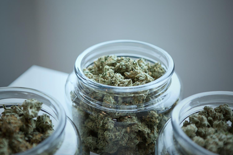 Jak legálně pěstovat marihuanu (konopí)? 5