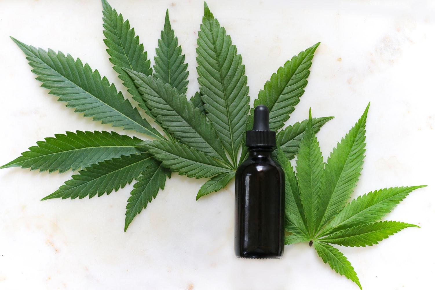 Jak legálně pěstovat marihuanu (konopí)? 3