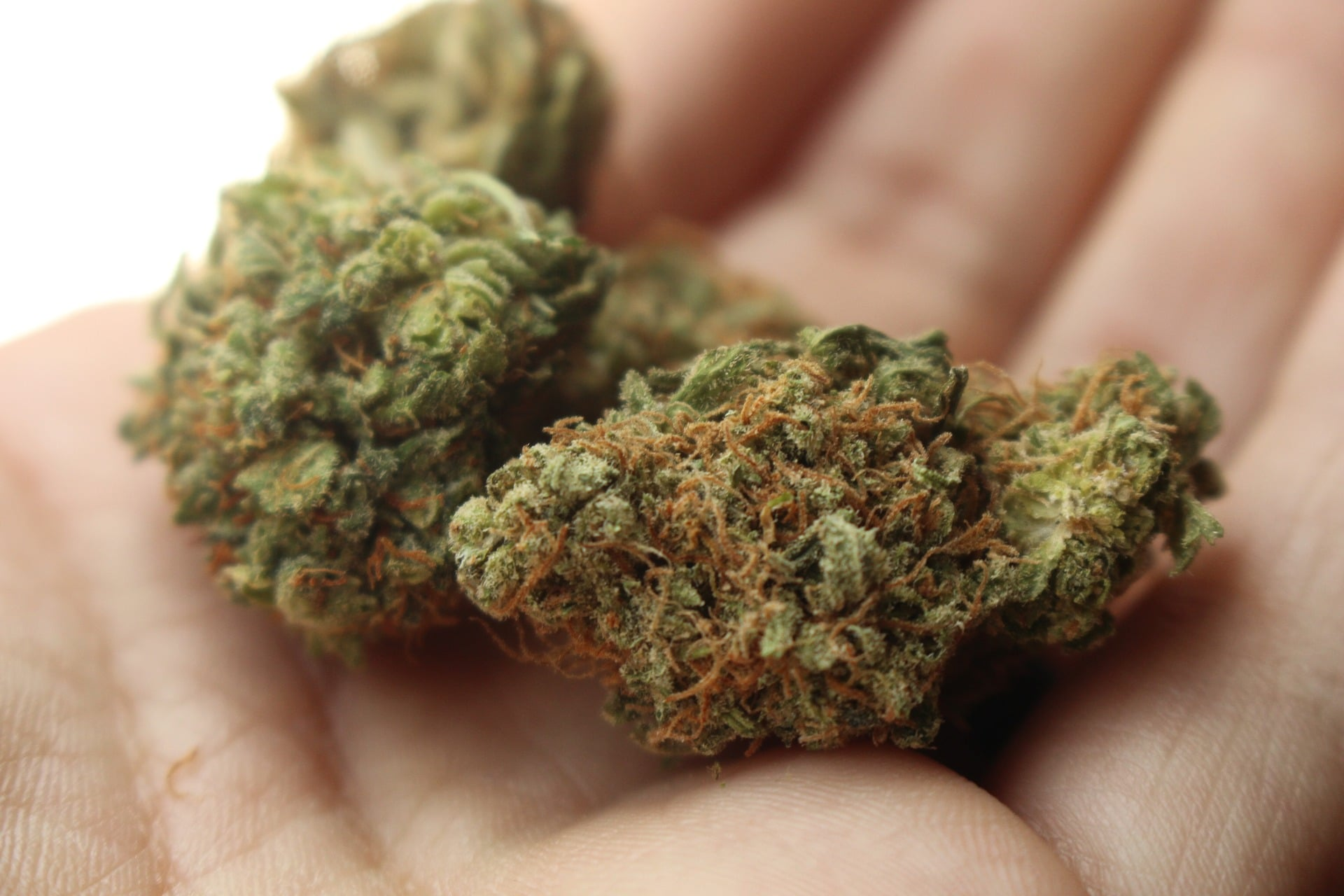 Jaké má marihuana účinky na psychiku? 2