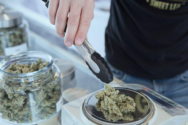 Jak to vypadá s legalizací marihuany v ČR? 2